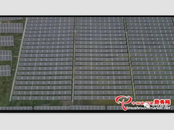 光伏板下种菌菇 发电发财两不误--星火太阳能