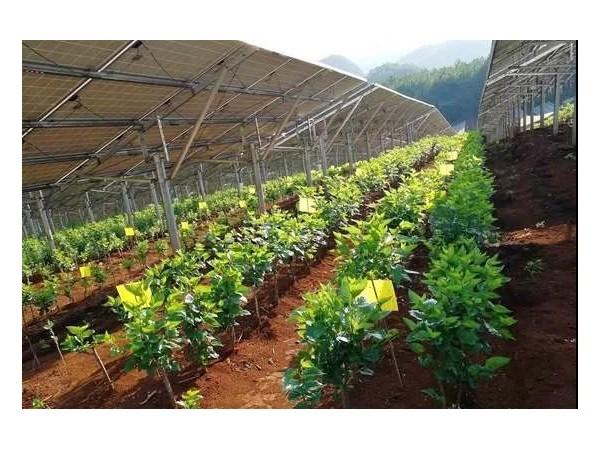 太阳能电池板对农作物居然有这种好处,不说都不知道