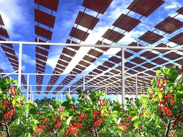 暴晒天,农作物和太阳能板更配