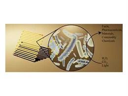 细菌微型太阳能板只要一个桶就能进行光合作用