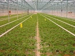 新型太阳能发电温室:种菜发电两不误!