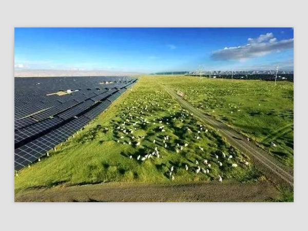 光伏发电站放了几千只羊,世界难题被轻松解决--星火太阳能